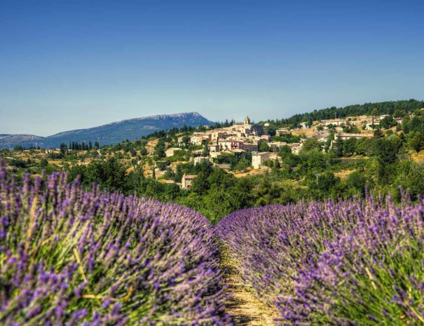 village lavande provence
